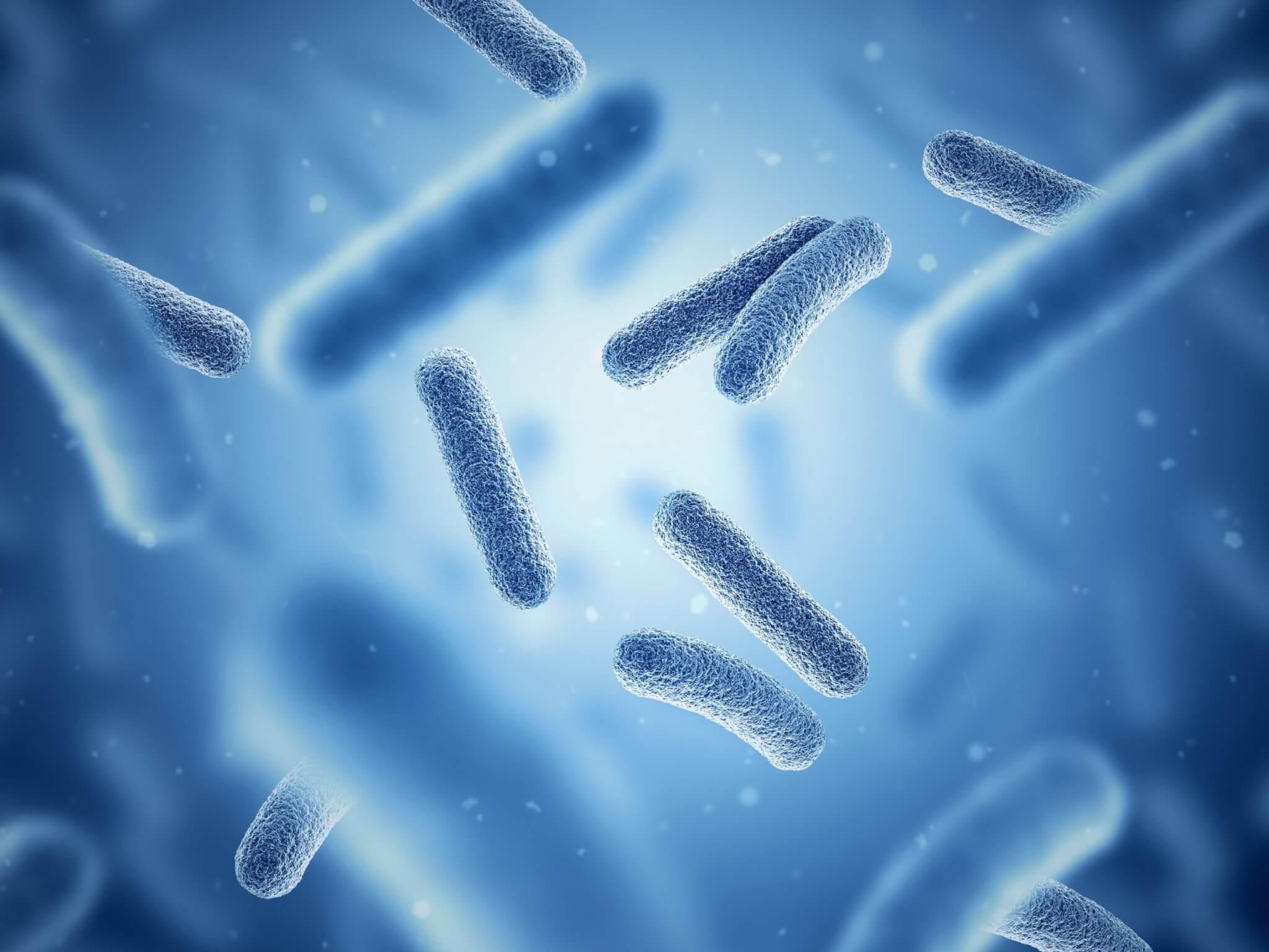 marketing communication probiotiques