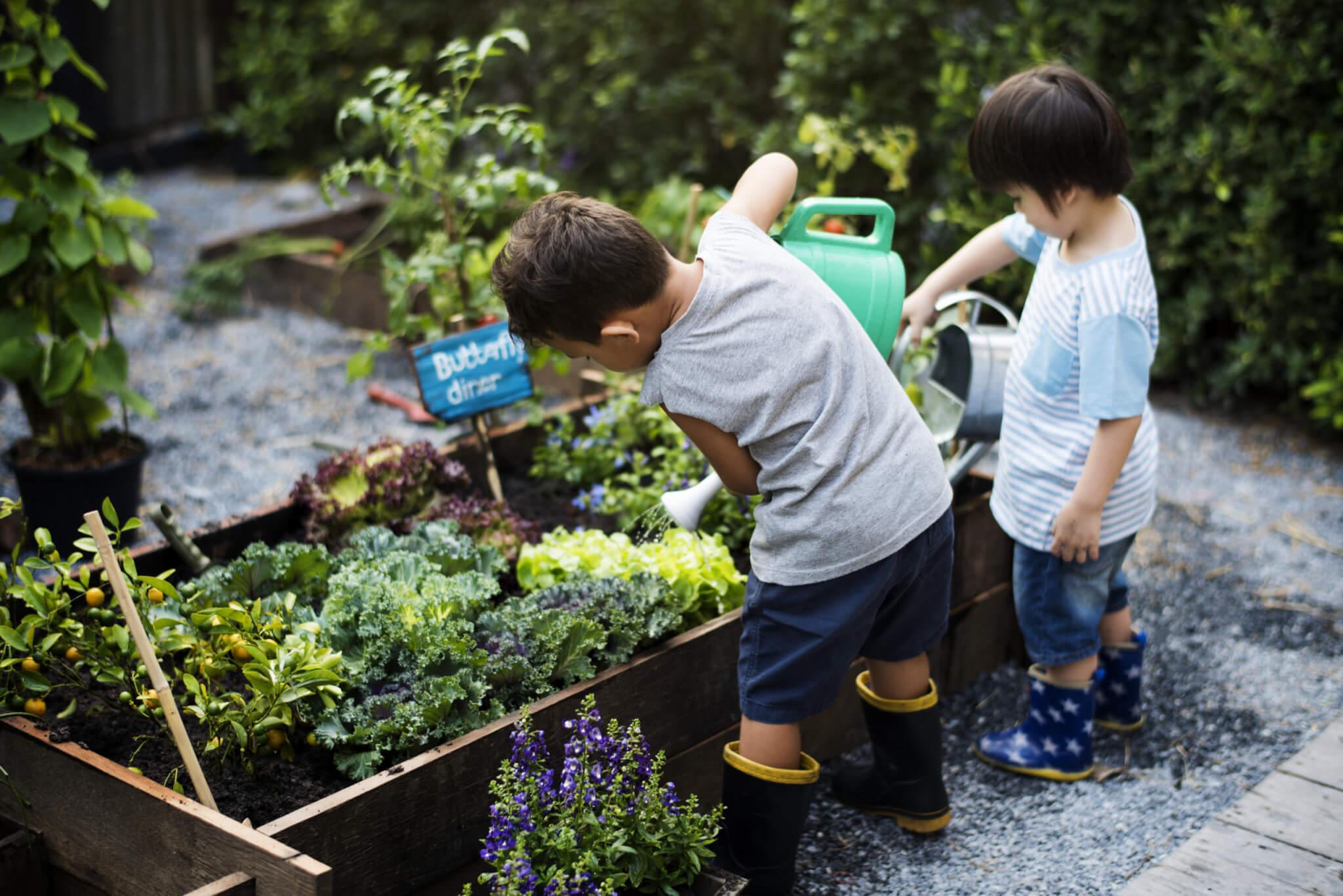 Little boys watering the plants
